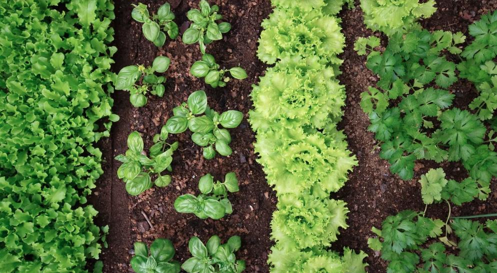 Revitaliser l'agriculture en Martinique